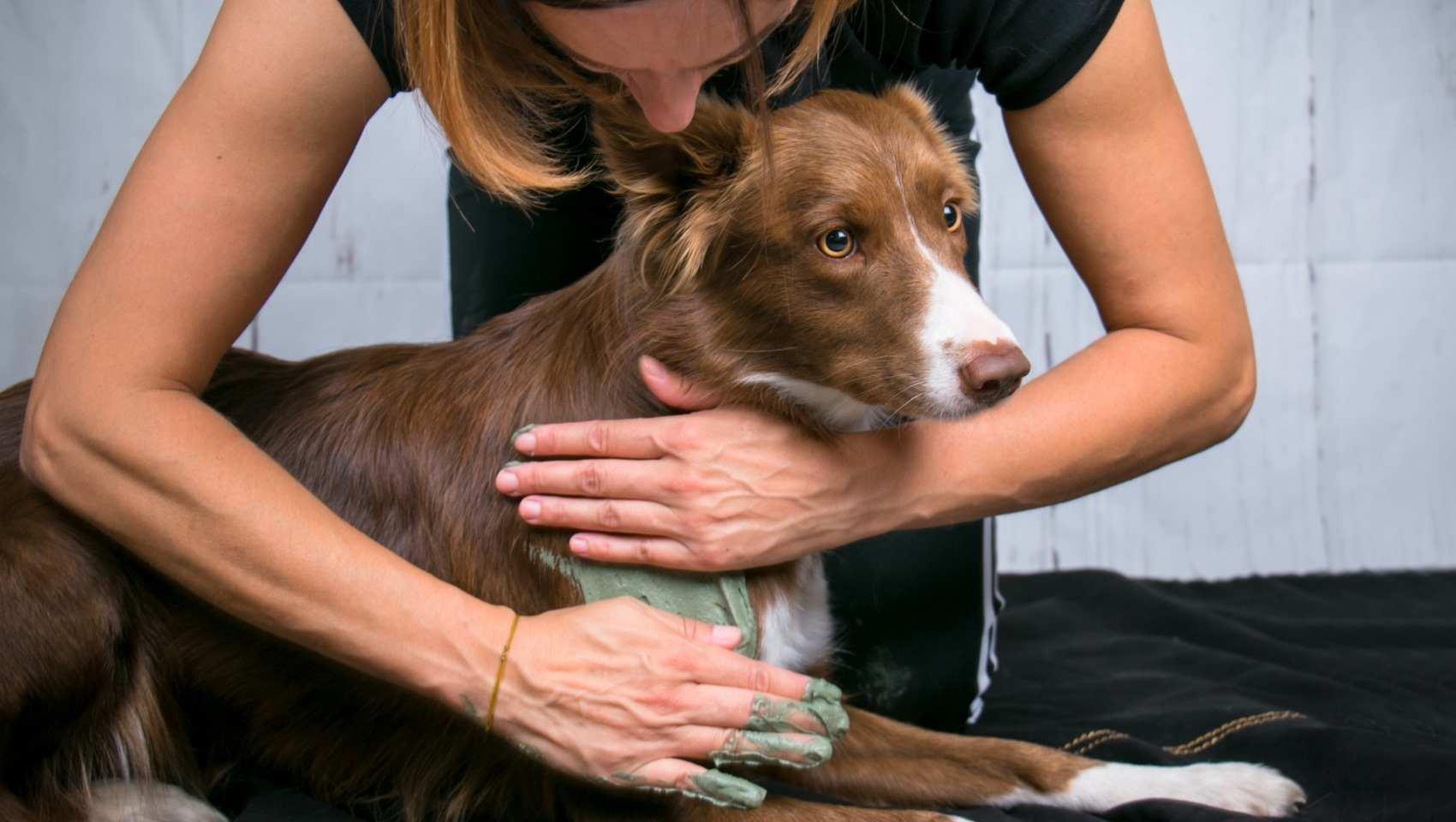 Un concept inédit, innovant et performant pour le bien-être de votre chien et de votre cheval.